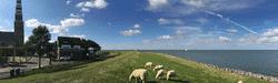 friesland-hindeloopen-schafe-am-strand